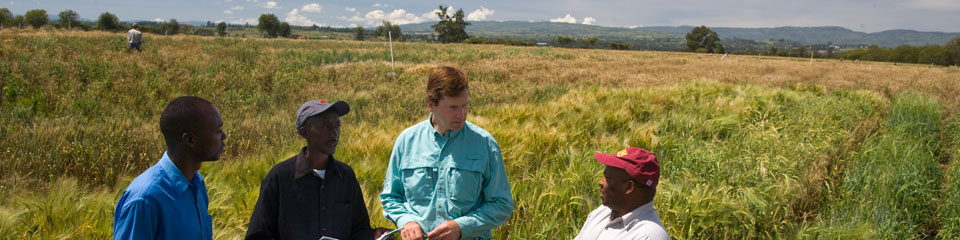 Research partnership on wheat rust in Kenya
